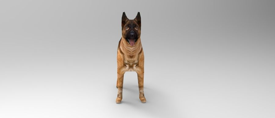 german shepherd dog rigged royalty-free 3d model - Preview no. 13