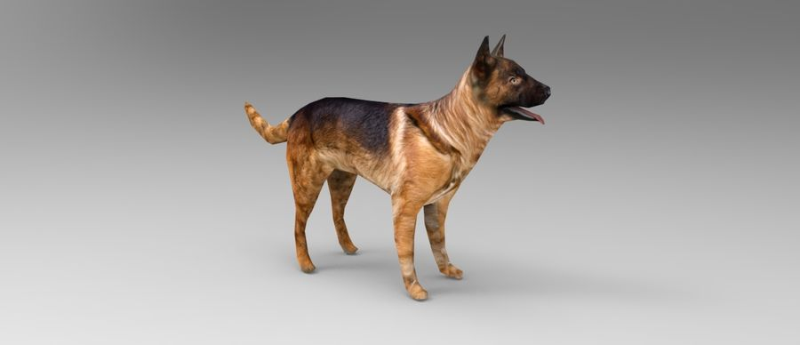 german shepherd dog rigged royalty-free 3d model - Preview no. 12