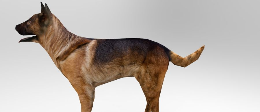 german shepherd dog rigged royalty-free 3d model - Preview no. 15