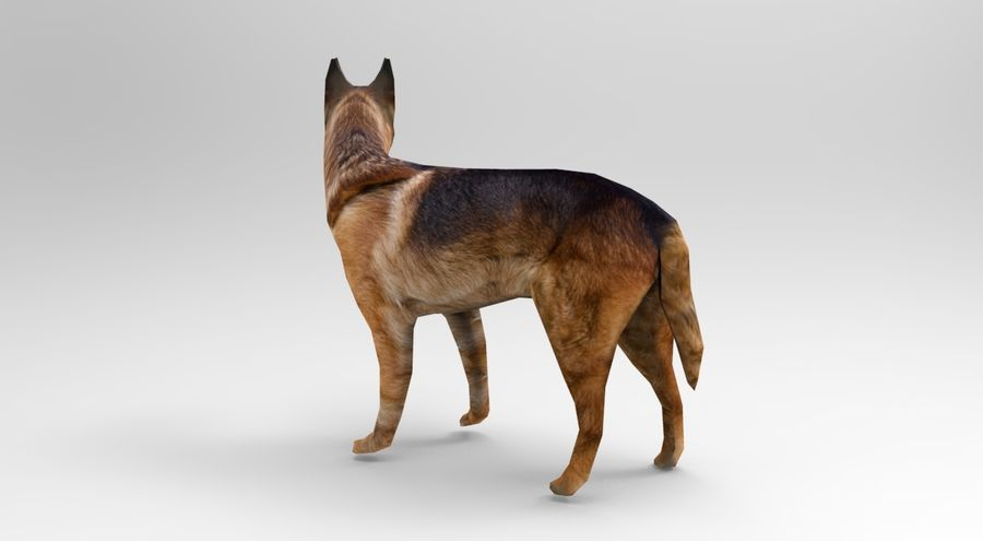 german shepherd dog rigged royalty-free 3d model - Preview no. 4