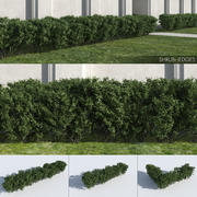 Shrub Hedges 3d model
