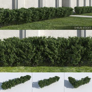Hedges de arbustos 3d model