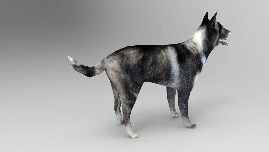 dog rigged royalty-free 3d model - Preview no. 14