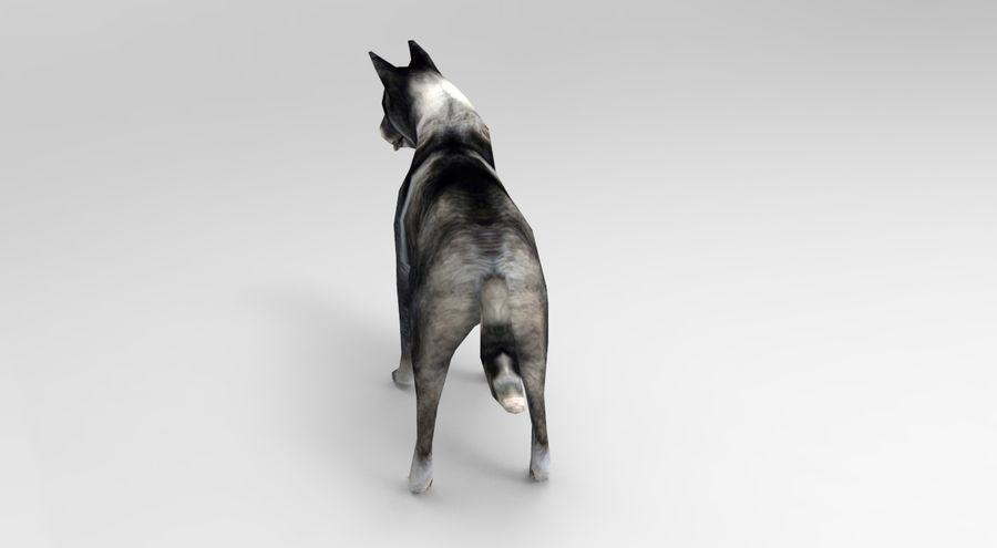 dog rigged royalty-free 3d model - Preview no. 10