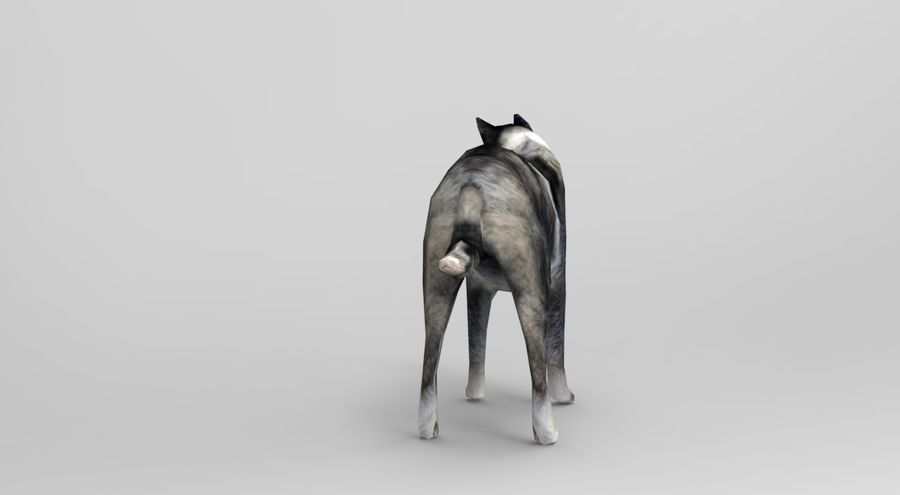 dog rigged royalty-free 3d model - Preview no. 4