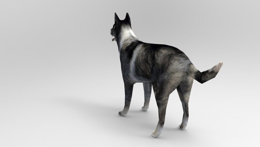 dog rigged royalty-free 3d model - Preview no. 12