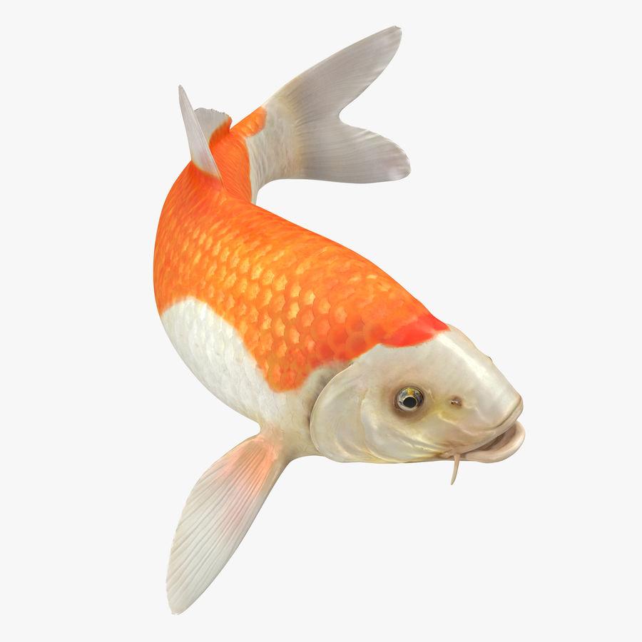 Harivake Koi Fish Swiming Pose royalty-free 3d model - Preview no. 1
