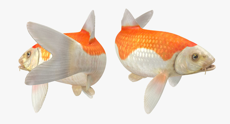 Harivake Koi Fish Swiming Pose royalty-free 3d model - Preview no. 8
