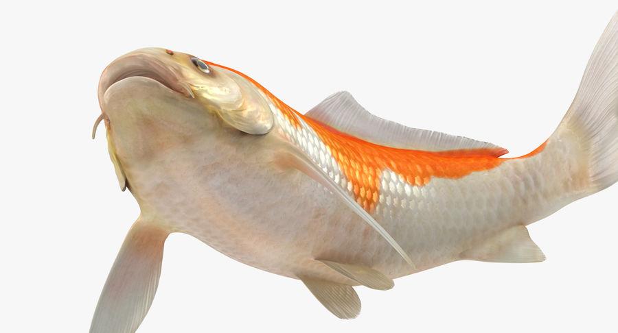 Harivake Koi Fish Swiming Pose royalty-free 3d model - Preview no. 10