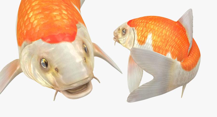 Harivake Koi Fish Swiming Pose royalty-free 3d model - Preview no. 13
