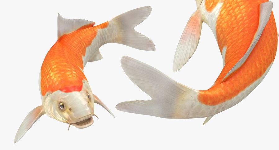 Harivake Koi Fish Swiming Pose royalty-free 3d model - Preview no. 11