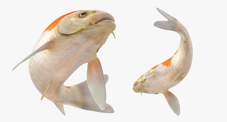 Harivake Koi Fish Swiming Pose royalty-free 3d model - Preview no. 5