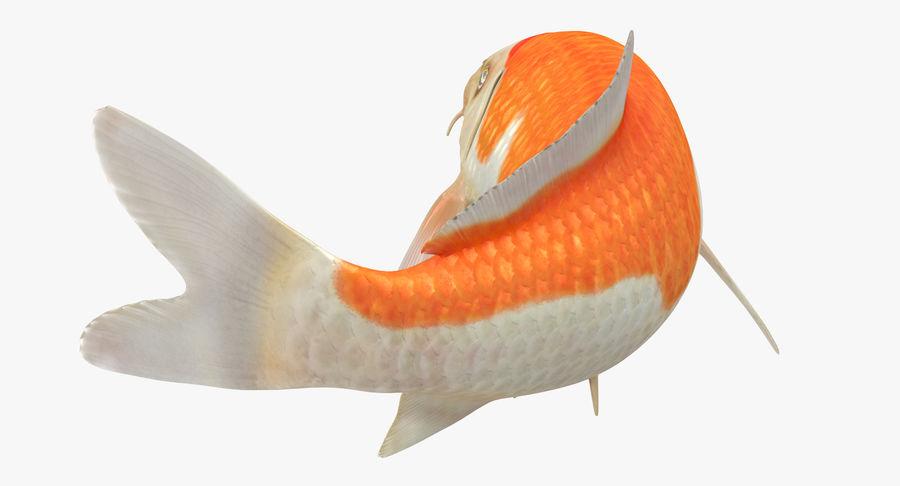 Harivake Koi Fish Swiming Pose royalty-free 3d model - Preview no. 14