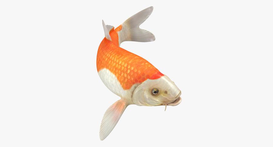 Harivake Koi Fish Swiming Pose royalty-free 3d model - Preview no. 2