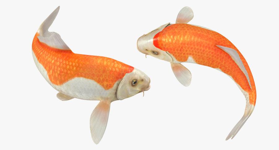 Harivake Koi Fish Swiming Pose royalty-free 3d model - Preview no. 4