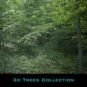 Beech Tree Collection (static) 3d model