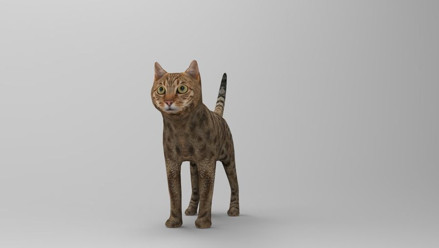 猫のアニメーション(1) royalty-free 3d model - Preview no. 20