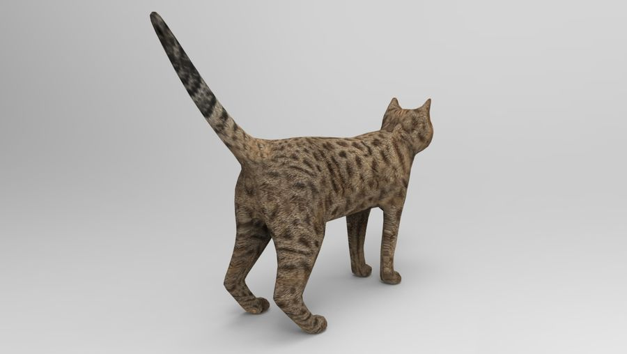 猫のアニメーション(1) royalty-free 3d model - Preview no. 13