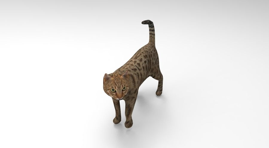 猫のアニメーション(1) royalty-free 3d model - Preview no. 7