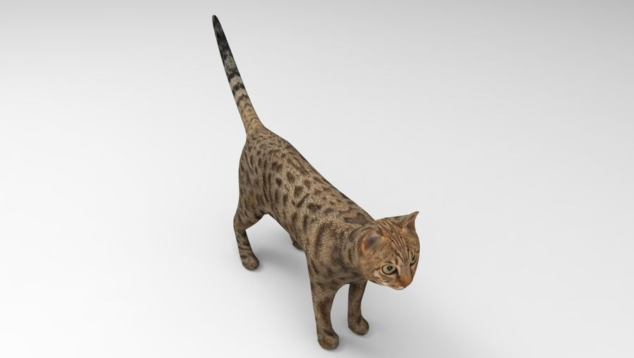 猫のアニメーション(1) royalty-free 3d model - Preview no. 18