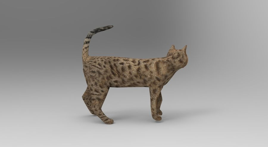 猫のアニメーション(1) royalty-free 3d model - Preview no. 6