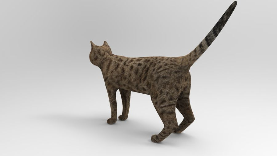 猫のアニメーション(1) royalty-free 3d model - Preview no. 10