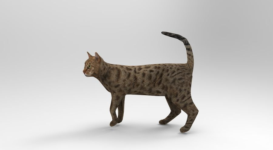 猫のアニメーション(1) royalty-free 3d model - Preview no. 2