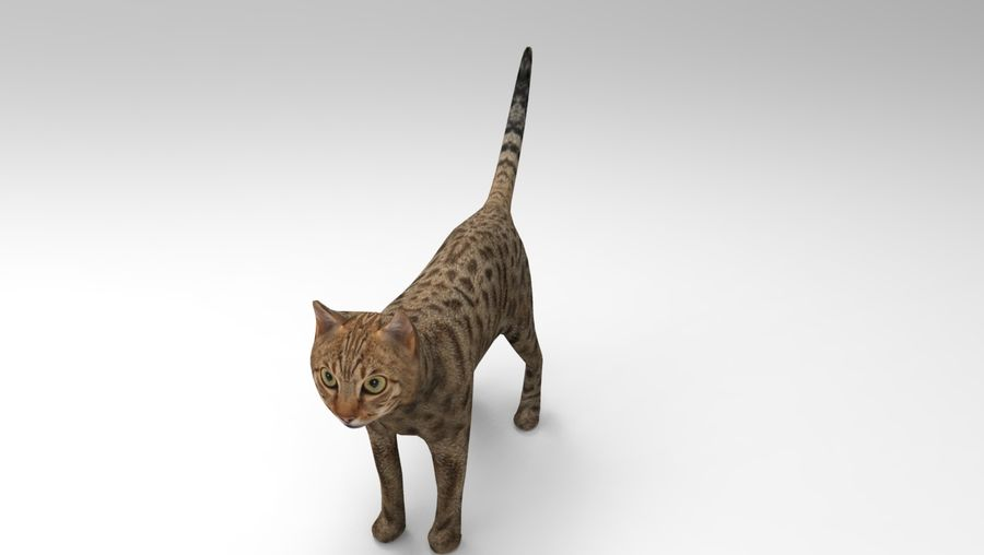 猫のアニメーション(1) royalty-free 3d model - Preview no. 19