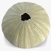 Sea Urchin Paracentrotus 3d model