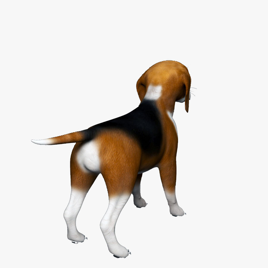 比格犬 royalty-free 3d model - Preview no. 6