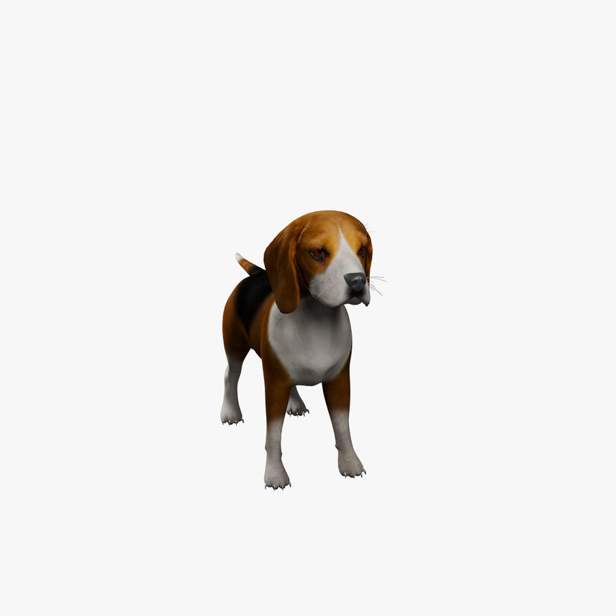 比格犬 royalty-free 3d model - Preview no. 8