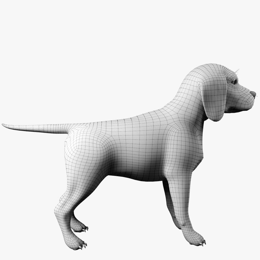 比格犬 royalty-free 3d model - Preview no. 10