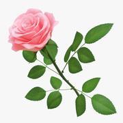 Rose 03 3d model