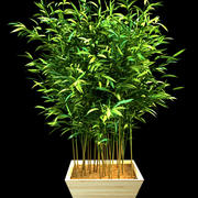 竹3 3d model
