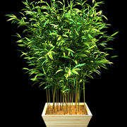 bambu 3 3d model