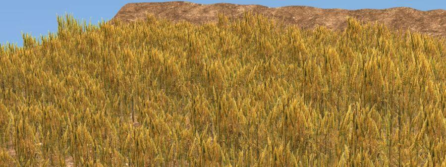 campo de trigo. royalty-free 3d model - Preview no. 2