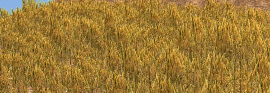 campo de trigo. royalty-free 3d model - Preview no. 3