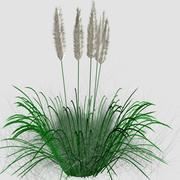 Grama alta ornamental 3d model