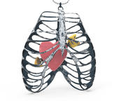 Naszyjnik Serce klatka piersiowa 3d model