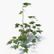 Planta De Hiedra (02) modelo 3d