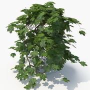 Ivy Plant (05) 3d model