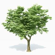 Árvore de álamo 3d model
