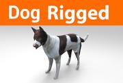 hond opgetuigd 3d model