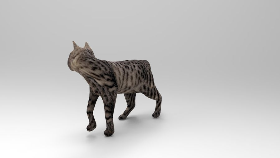 kot takielunek royalty-free 3d model - Preview no. 3