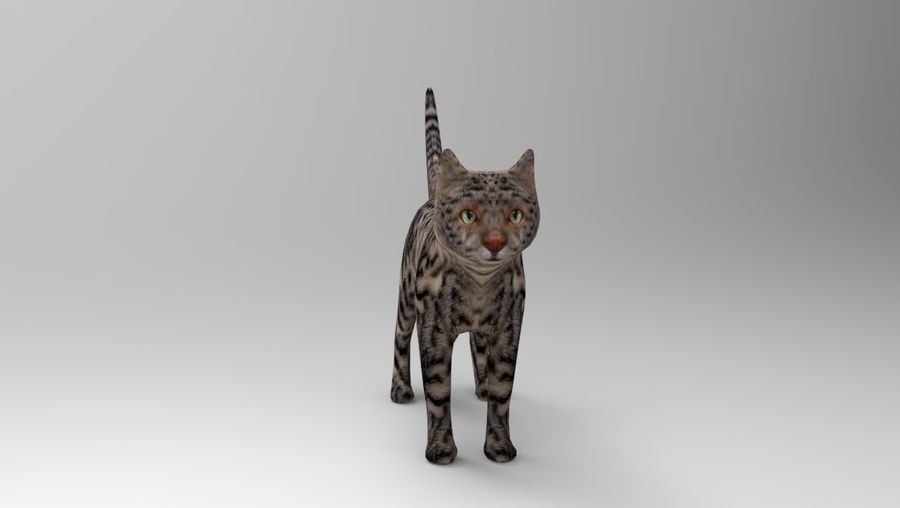 kot takielunek royalty-free 3d model - Preview no. 22