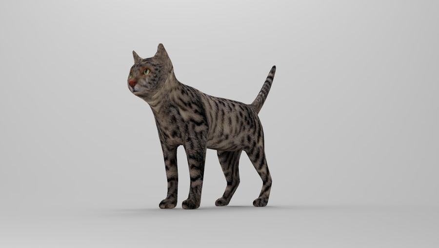 kot takielunek royalty-free 3d model - Preview no. 25