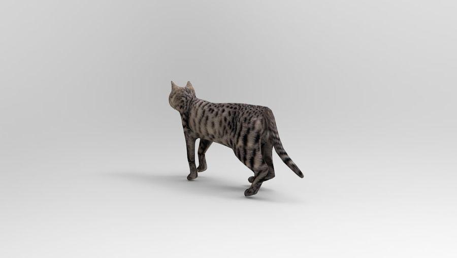 kot takielunek royalty-free 3d model - Preview no. 12