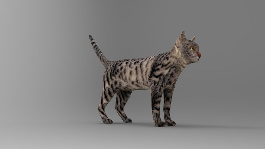 kot takielunek royalty-free 3d model - Preview no. 26