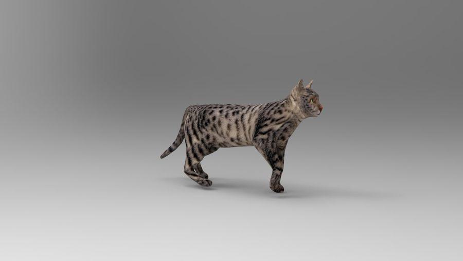 kot takielunek royalty-free 3d model - Preview no. 9
