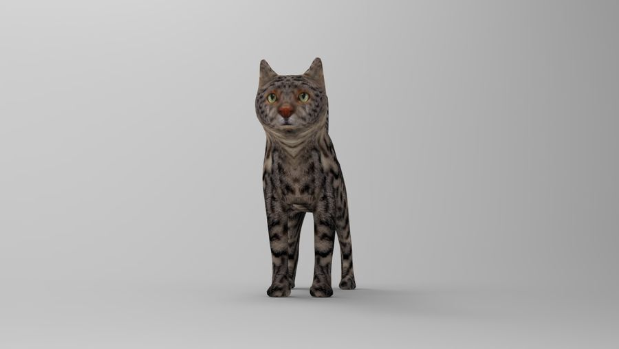 kot takielunek royalty-free 3d model - Preview no. 23